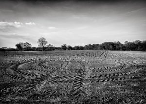 A Norfolk field