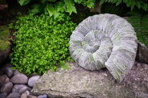 Plant ammonite