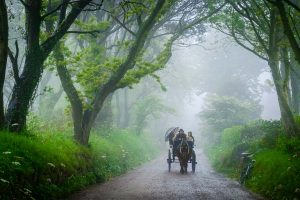 My entry to the APOY competition. A horse and carriage appears out of the mist on Sark.