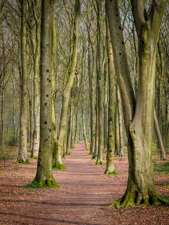 An avenue of trees at Micheldever Wood